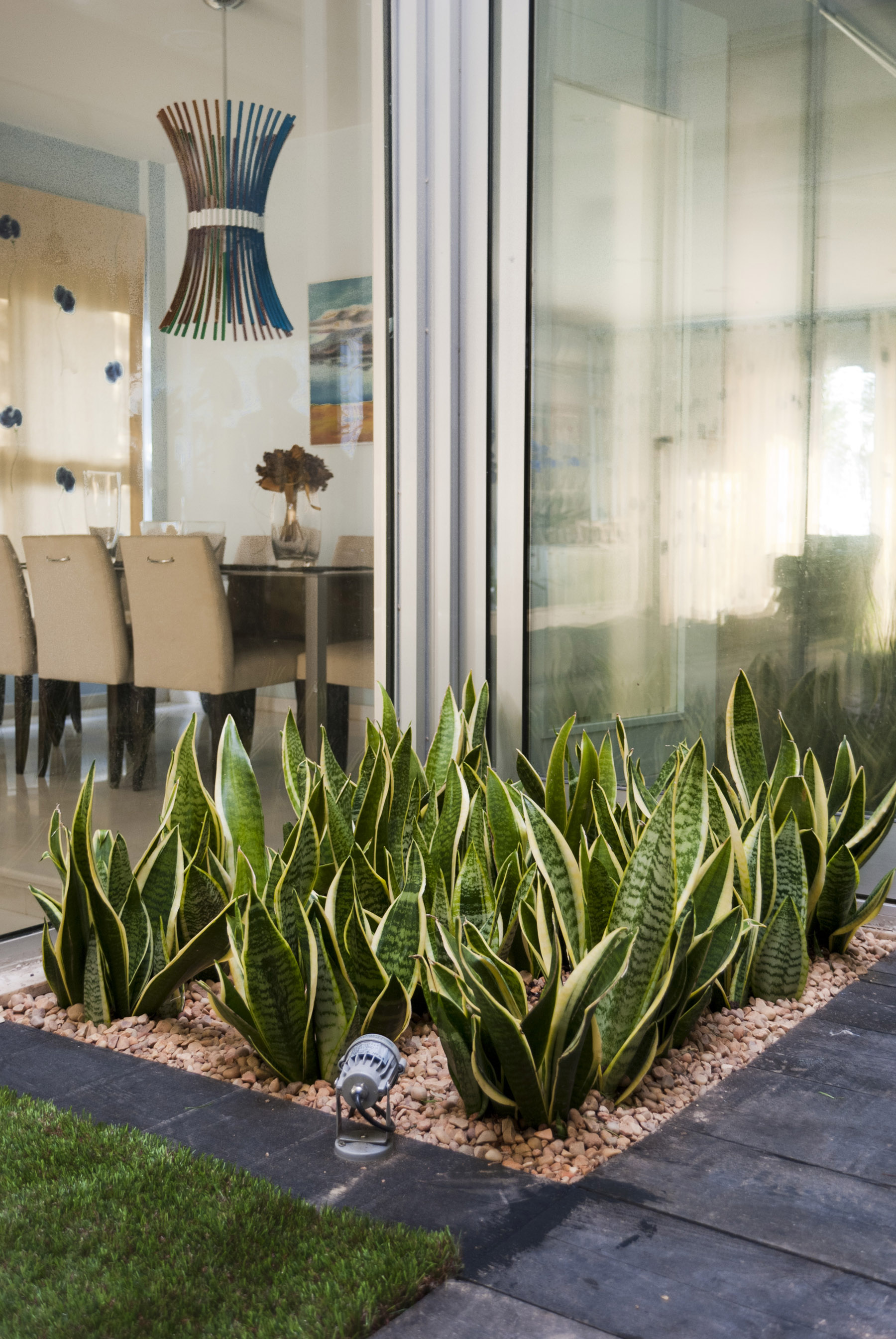 Diseno jardin pequeno sansevieria david jim nez for Decorar un atico pequeno
