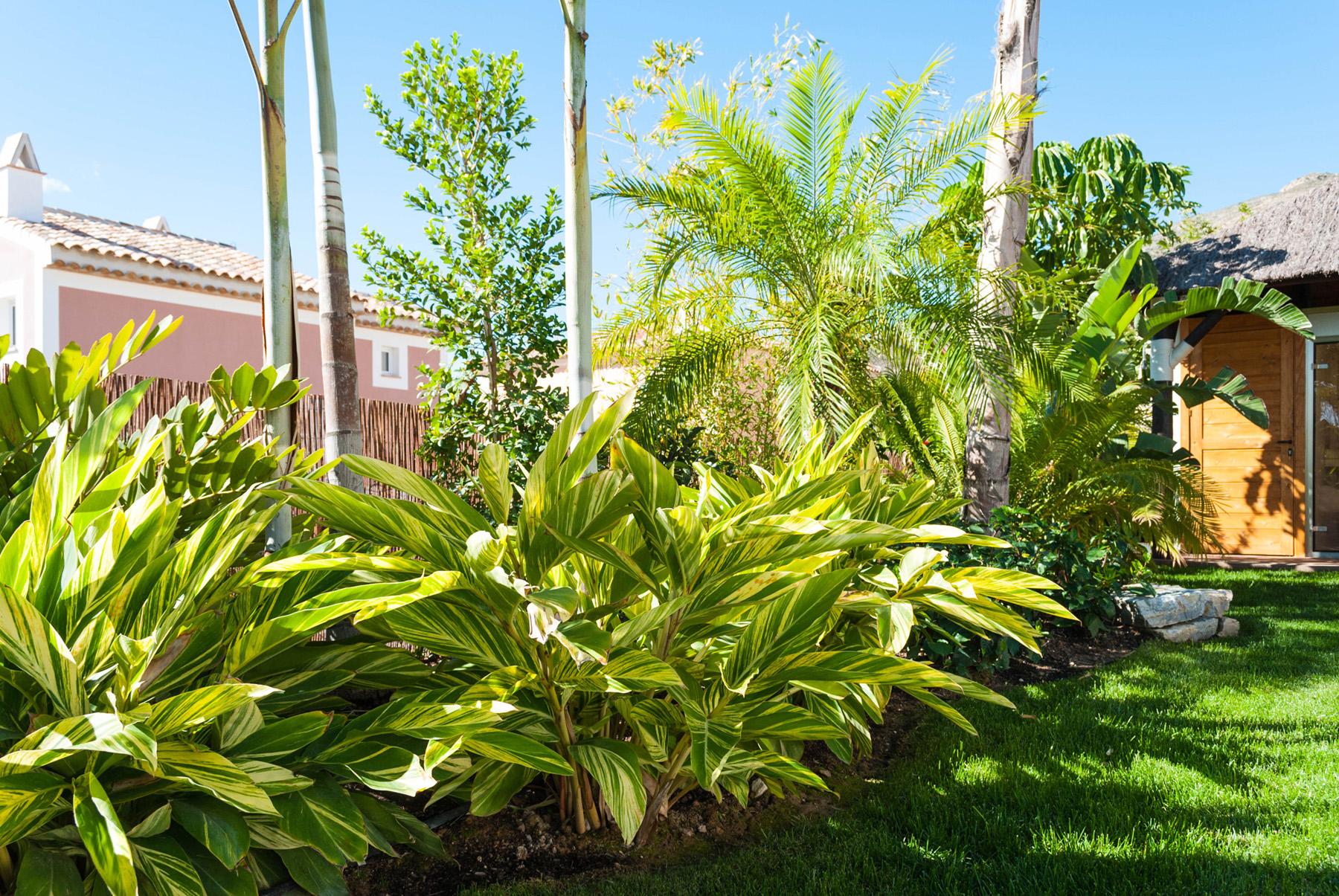 Dise o de jard n tropical villa de lujo en benidorm - Diseno jardines madrid ...