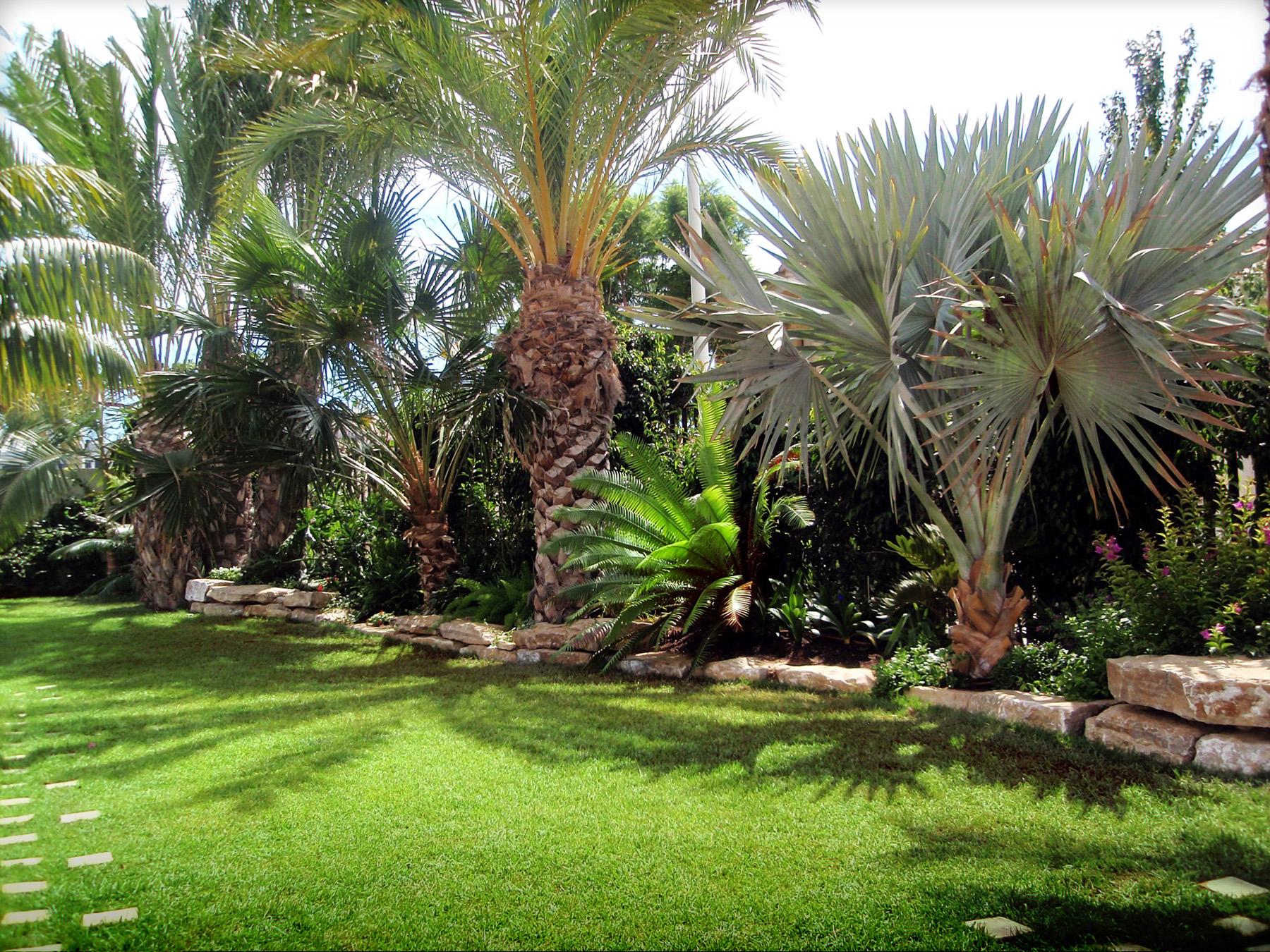 El jard n de to i y juan en elche jard n mediterr neo Plantas jardin mediterraneo
