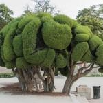 La historia de los cipreses del Parque de El Retiro.