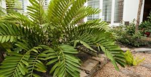 diseño de jardin interior con planta subtropical