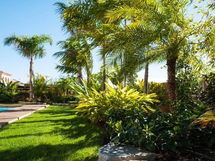 Jardin tropical