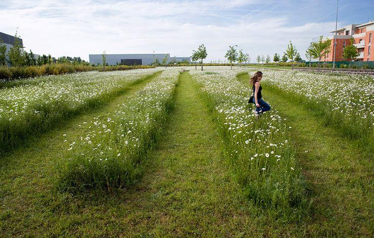 Recorrer el paisaje protegido. Caminos en el territorio.